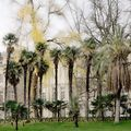 jardin public, la palmeraie