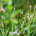 Je suis une formation de conseillère agréee fleurs de bach / article de nathalie / 3 ouvrages simples pour débuter