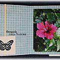 Album Papillons