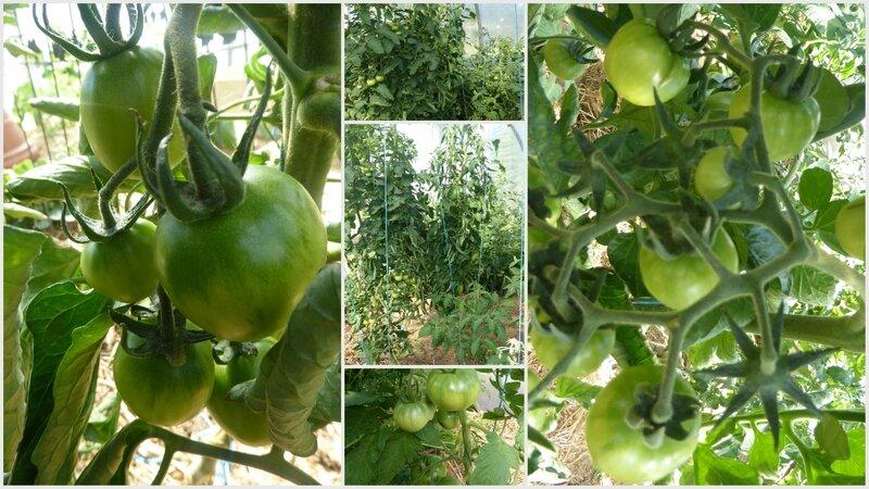 8-tomates