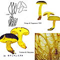 Boletus_ornatipes_abcd