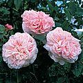 claire rose