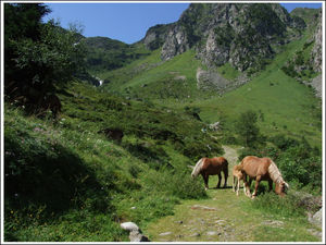 pyrenees_2