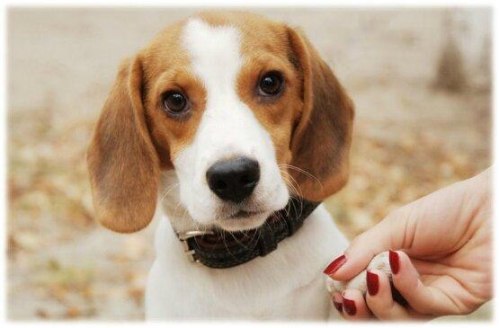 Couper les griffes de son chien mystere naturel - Peut on couper les ongles des chiens ...