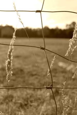 Campagne_8