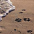 Chiens acceptés sur les plages (3)