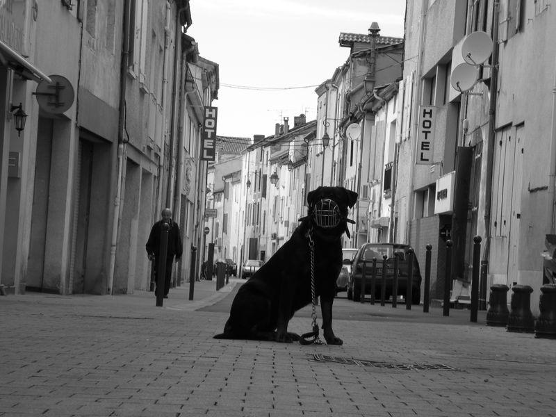 baboune a la ville portré