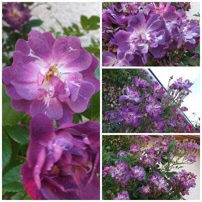 Ciel 10 06 & fleurs (12)