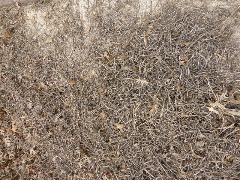 10-filets à ramer (1)