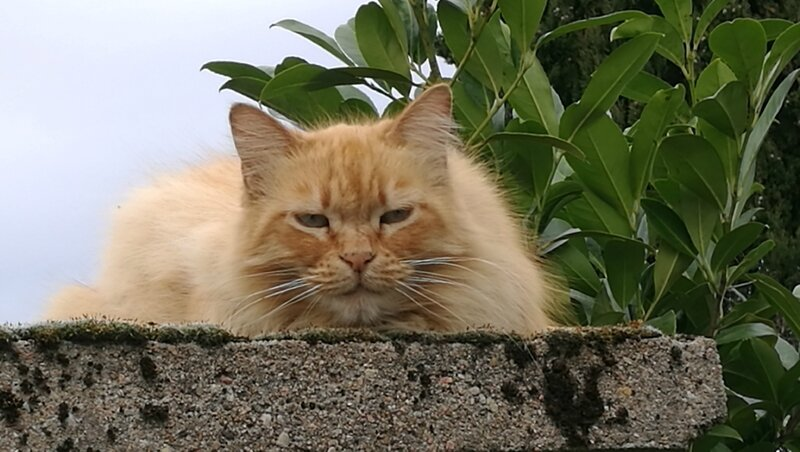 chat rue