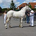 Concours élevage local - thérouanne 2012