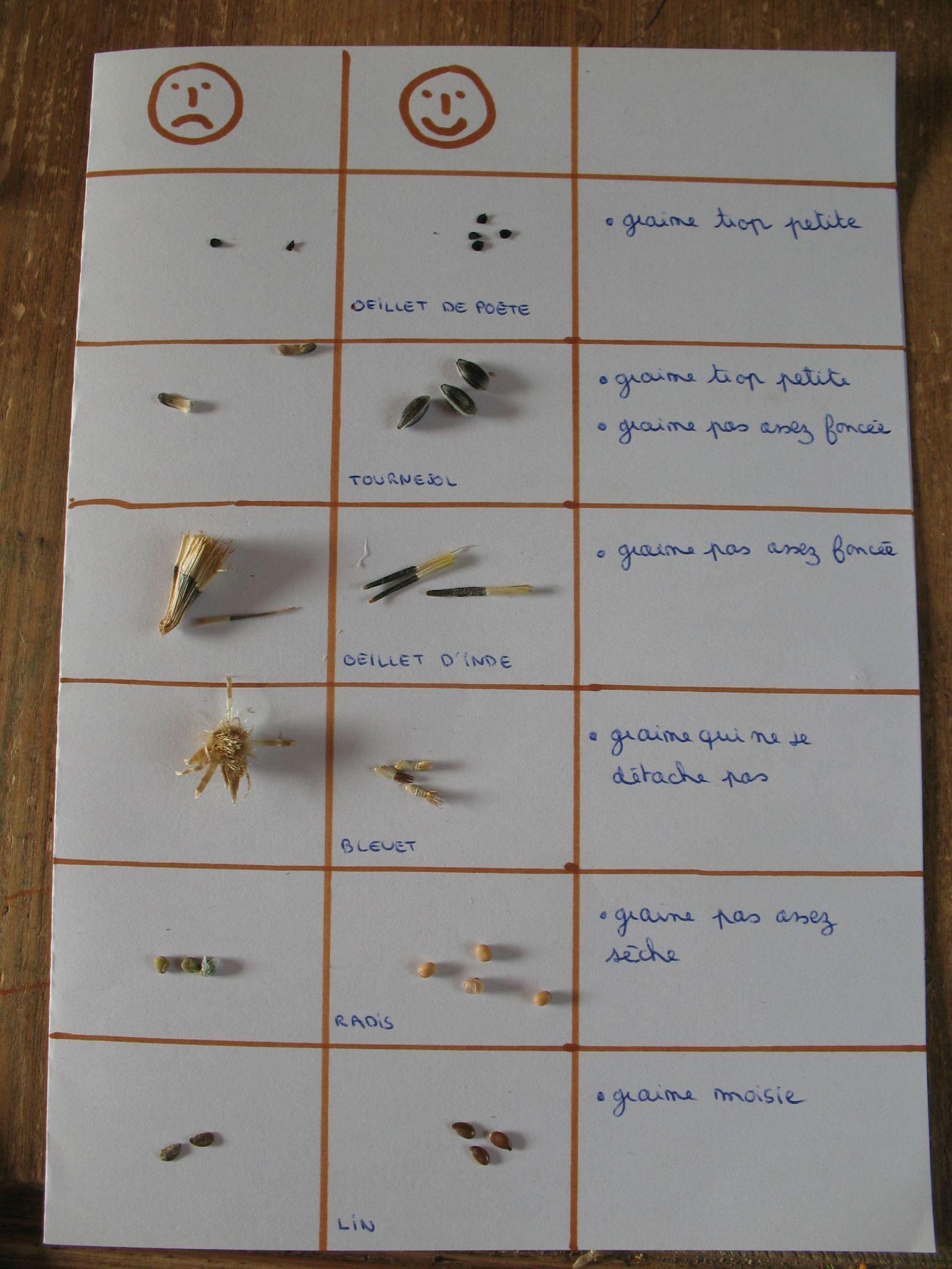 comment savoir si une graine est belle