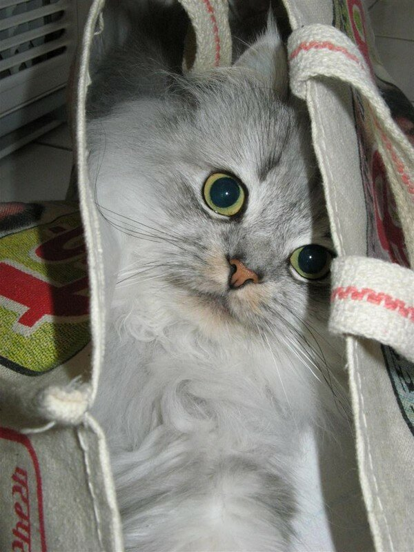 In ze bag