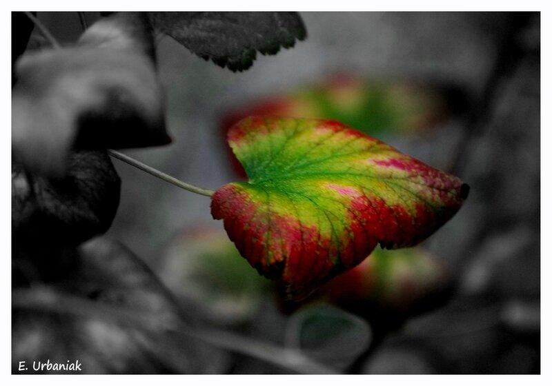 automne agonisant 2