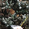 Windows-Live-Writer/Christmas-tree_1116B/DSCN3568_thumb