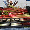 Après les prunes ..... la rhubarbe le pied était