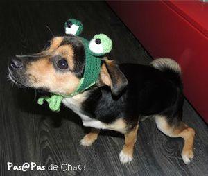 2013-08-grenouille10