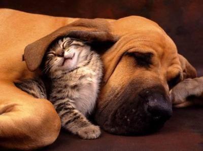 chien et chat sous l'oreille