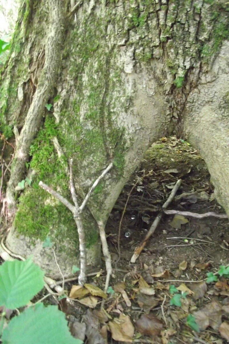 My fairy Life ( 8) :Toiles d araignées et champignons