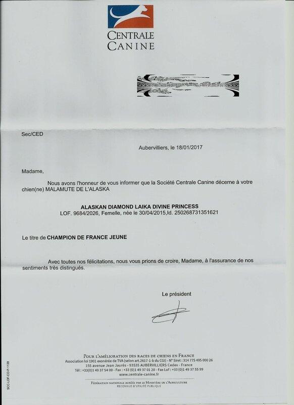 Champion France Jeune Laïka sans nom