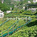 2012_05260211_amalfi valle ferriere citroniers