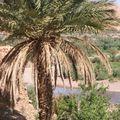 maroc 216