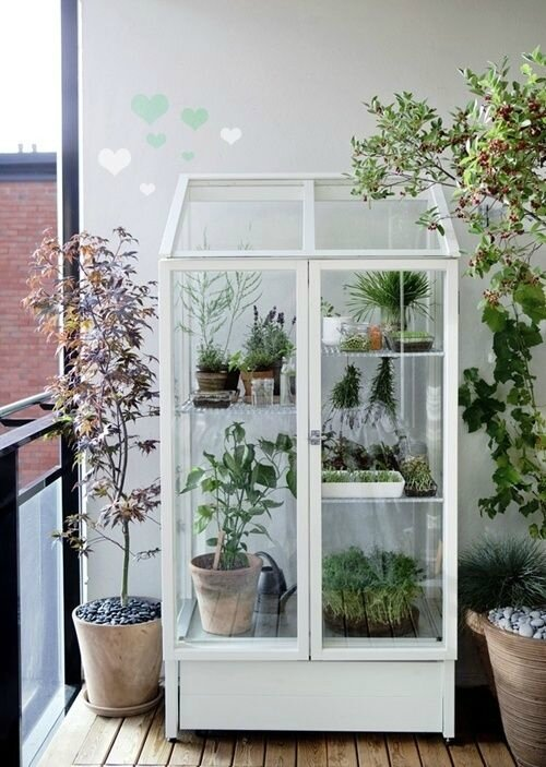 small-greenhouse