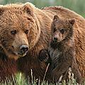 Câlin d'ours avec mouny, 22e inscrite