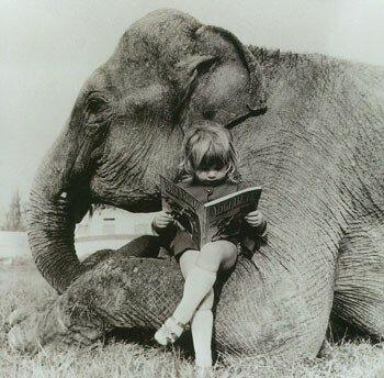 elephant lit