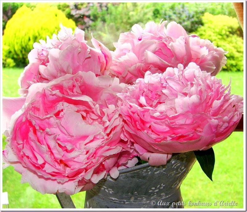 Roses, pivoines et seringat (19)