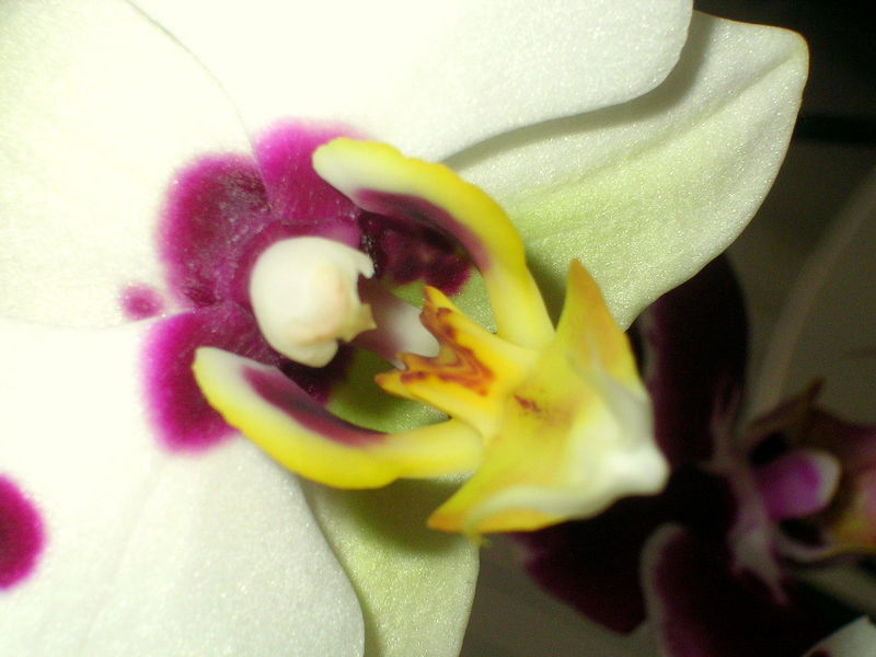 Comment appelle t on un collectionneur d 39 orchid e a la - Comment couper un orchidee ...