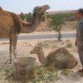 Djerba Mai 2006 (61)
