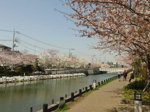 Hanami2012-Shinkawa-3