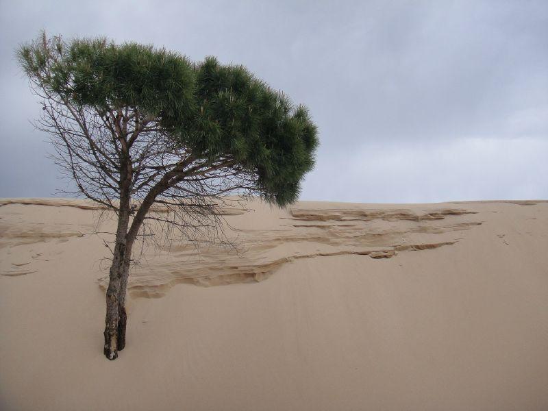 Espagne 2012 6 entre costa del sol et costa de la luz - Camping jardin de las dunas ...