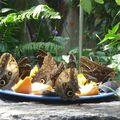 Butterfly_052408_27