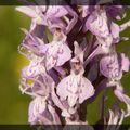 Orchidées et autres fleurs
