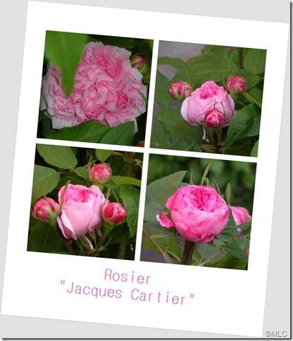 jacquescartier0101