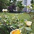 Parc de Belleville, Paris, été 2011 (17)
