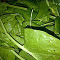 legumes recup (5)