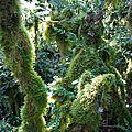 La forêt amazonienne de velars sur ouche