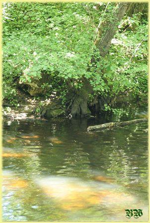 racines_dans_l_eau