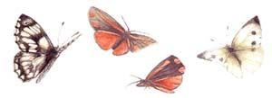 papillons_rouges