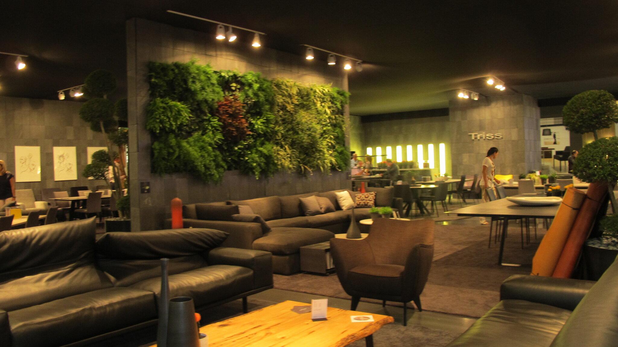 Les plantes vertes pour les grands espace green plants for Plante verte pour salon