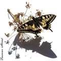Machaon, expo photo