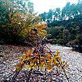 feuilles d'automne sur hutte yurtao