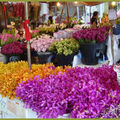 Des fleurs....