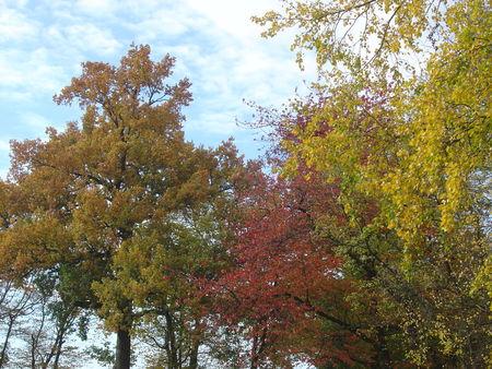 automne_001