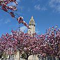 cerisier du japon devant St JO