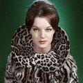 romy_schneider_by_sam_levin-1960s-studio_blue-fur_leopard-010-10
