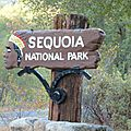 Sequoïa np: où l'on se croirait lilliputien !